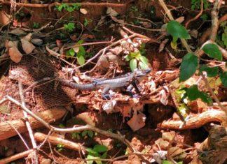 Tierbeobachtungen in Panama – enorme Vielfalt auf kleinem Raum