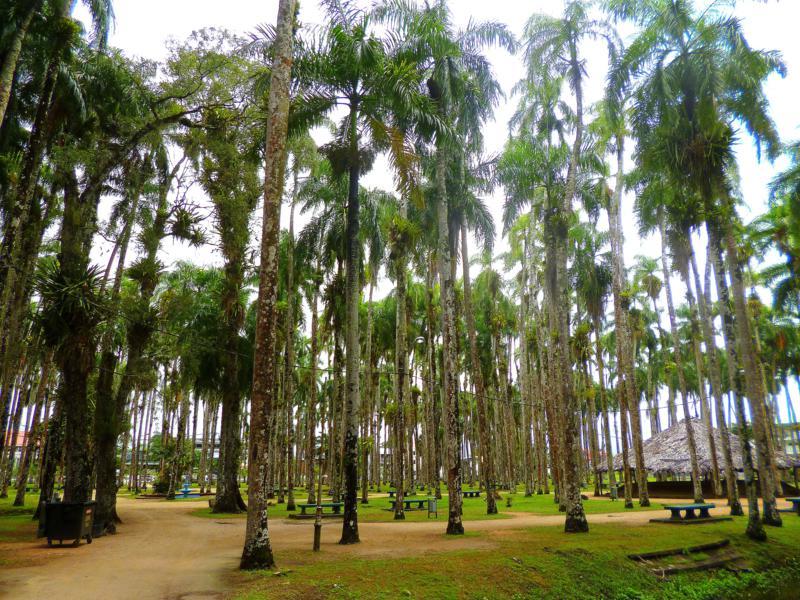 Das Palmentuin - Entspannungsoase mitten in Paramaribo