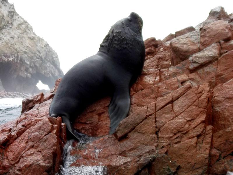 Ausflug zu den Islas Ballestas, den Galapagos-Inseln für Arme in Peru