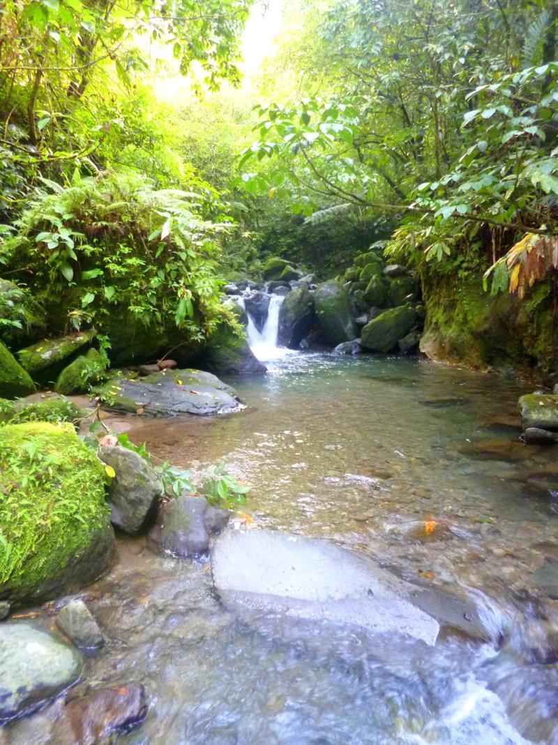 Idylle und Natur pur im North Negros National Park in den Philippinen