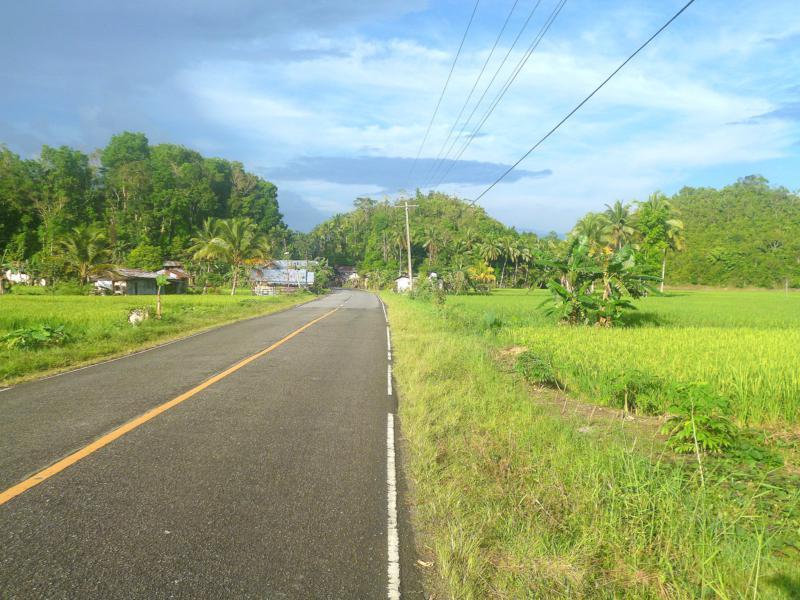 Grüne Reisfelder auf Bohol, einer Insel der Philippinen