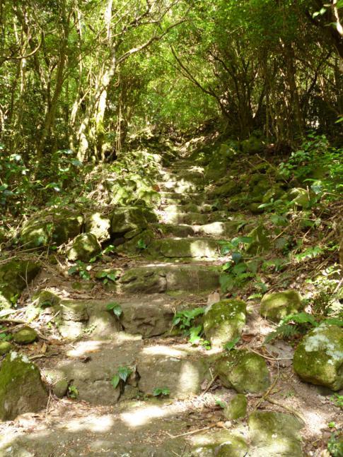 Stufen, Stufen, Stufen - so siehts aus auf dem Weg zum Mount Scenery