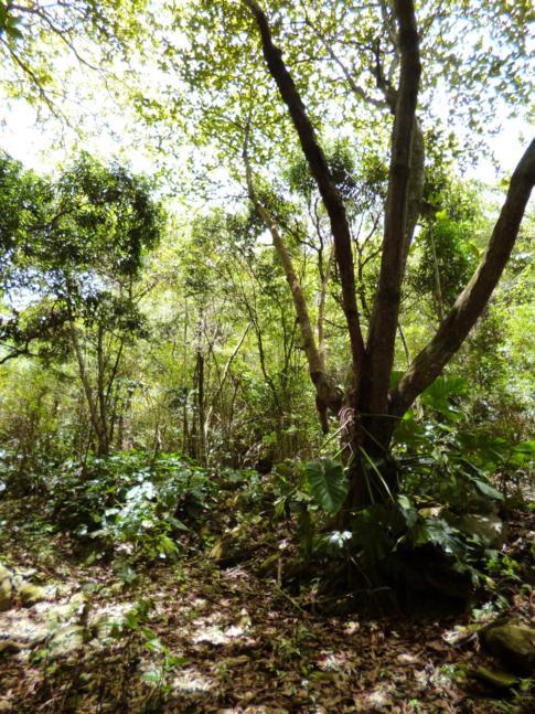 Weg zurück vom Mount Scenery via Bottom Mountain Trail
