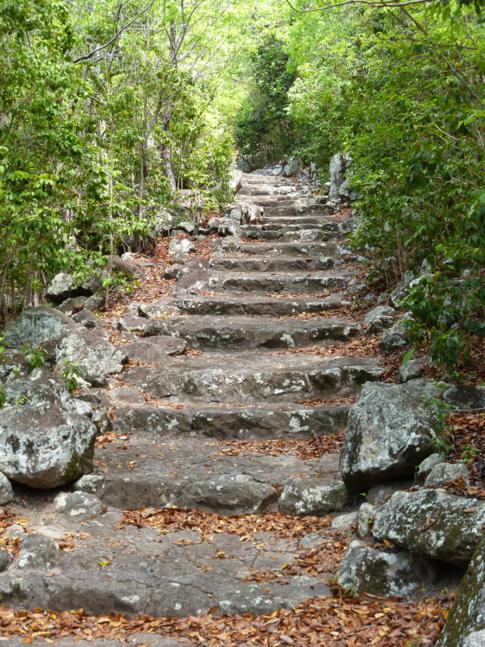Stufen über Stufen in der Ladder