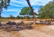 Spektakuläre Tierbeobachtungen im Fathala Wildlife Reserve im Senegal