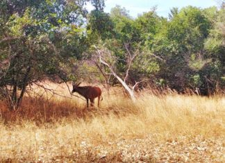 Safari im Fathala Wildlife Reserve – eine der günstigsten Safaris in Afrika