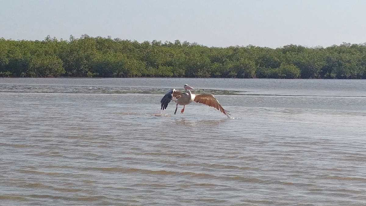 Spannender Ausflug zur Laguna Somone nahe dem Ferienort Saly Portudal