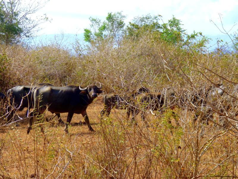 Beeindruckende Safari im Udawalawe National Park in Sri Lanka