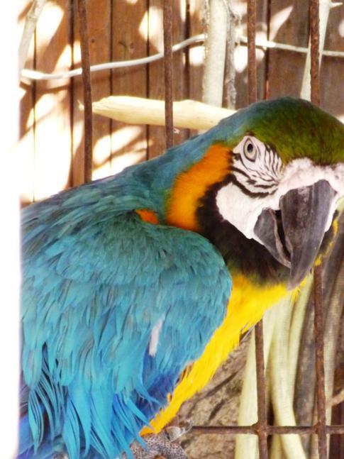 Die Papageien im Hotel