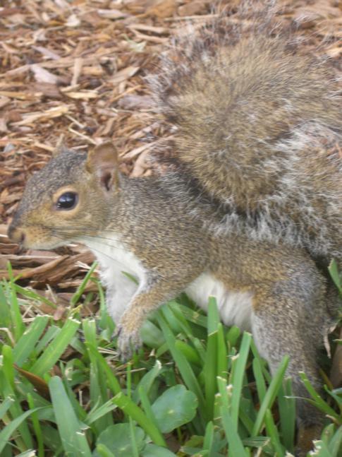 Die super sympatischen Squirrel überall in St. Petersburg