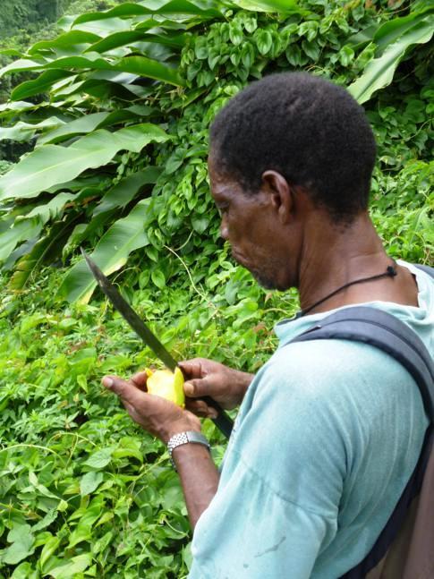 Unser Guide Franklyn beim Schneiden einer Mango