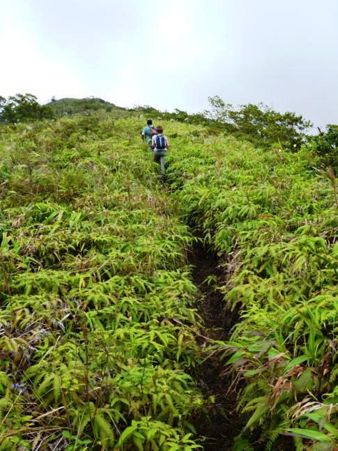 Der Weg hinauf auf den Soufriere Vulkan