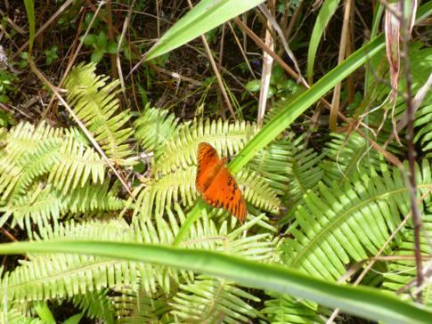 Kleine botanische Feinheit auf dem Weg zurück vom Vulkan