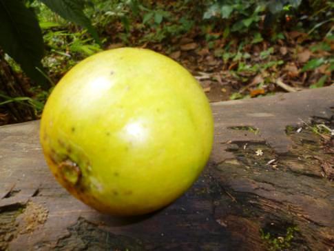 Mango während der Soufriere-Wanderung