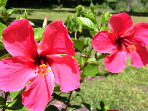 Der sehr gepflegte Botanische Garten in Kingstown