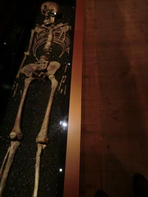 Ein Original-Skelett von einem der Besatzungsmitglieder auf der Vasa