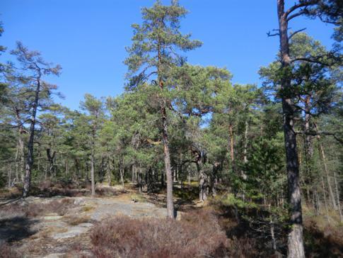 Der Naturlehrpfad im Tyresta Nationalpark