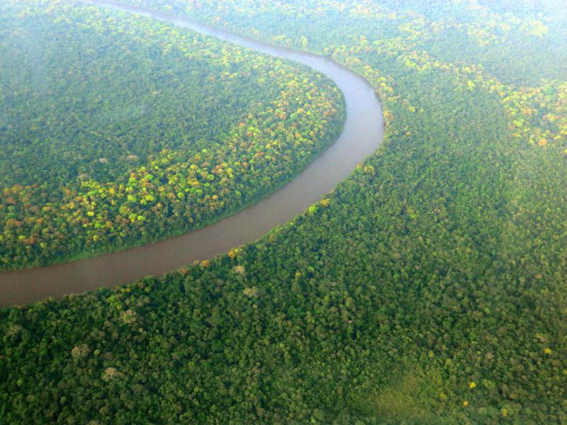 Blick auf den dichten Urwald von Suriname