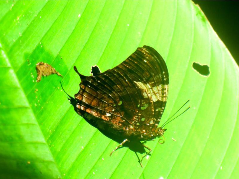 Kleine und große Bewohner in Surinames Regenwald