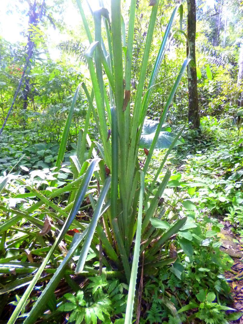 Der Dschungel von Suriname während unserer Back-to-Basic-Tour