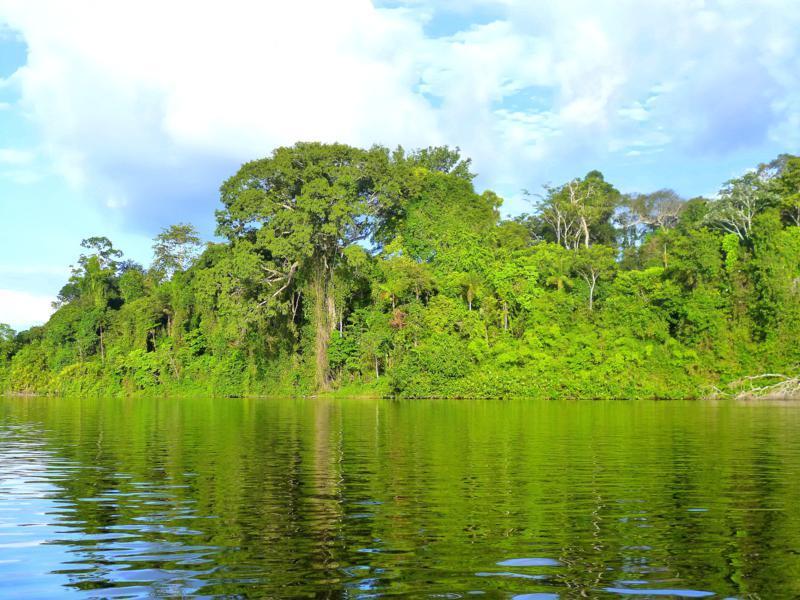 Beeindruckende Fahrten auf dem Suriname River