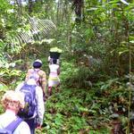 Bericht über die Back-to-Basic-Tour im Dschungel von Suriname