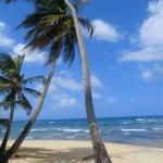 Ein zweiter Reisebericht über Barbados, u.a. mit Blue Orchids Hotel, Crane Beach, Welchman Hall Gully und Martins Bay