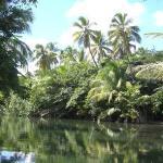 Bericht über unsere Bootsfahrt auf dem Indian River in Dominica
