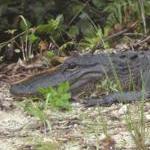 Reisebericht über unseren Besuch im Everglades National Park