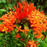 Bericht über unseren Besuch bei Hunte's Garden in Barbados
