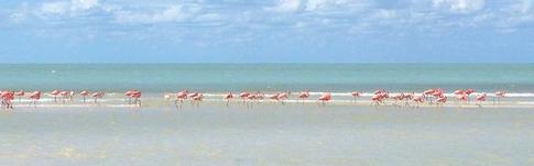 Eine kleine idyllische Insel im Norden von Yucatan - die Isla Holbox