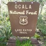 Unsere Erfahrungen im Ocala National Forest sowie mit der Fort Gates Ferry