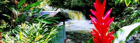 Erkundungen in der Region des Rio Napo im Amazonasbecken von Ecuador