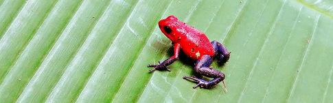 Tierbeobachtungstour in der Finca Verde Lodge im Tenorio National Park von Costa Rica