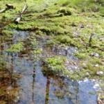 Ein kleiner Bericht über einen Ausflug zum Tyresta Nationalpark, nur 20 km südlich von Stockholm