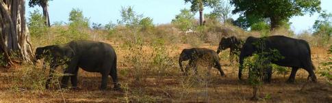 Bericht über meine beeindruckende Safari im Udawalawe Nationalpark in Sri Lanka