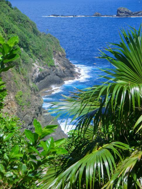 Ein Blick auf die Ostküste von Little Tobago