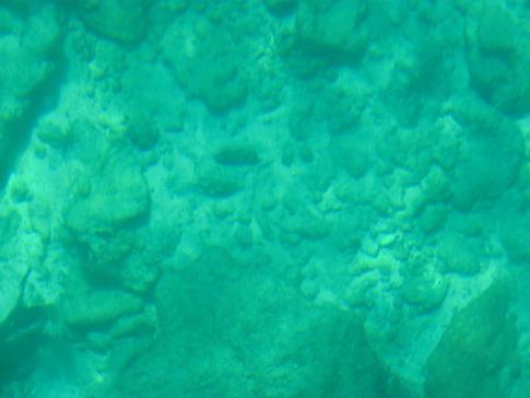 Blick auf das Angel Reef zwischen Speyside und Little Tobago, kurz vor Goat Island