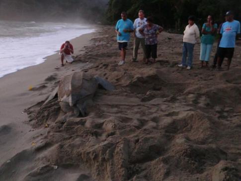 Ein außergewöhnliches Spektakel - die Eiablage der Lederschildkröten in Trinidad