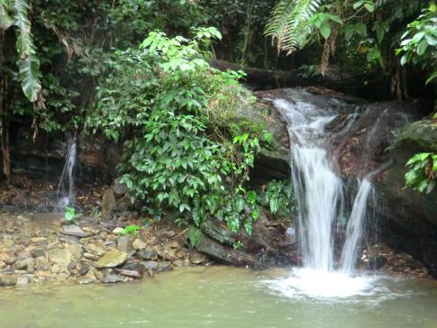 Der kleine Wasserfall am Fuße des ASA Wright Nature Center