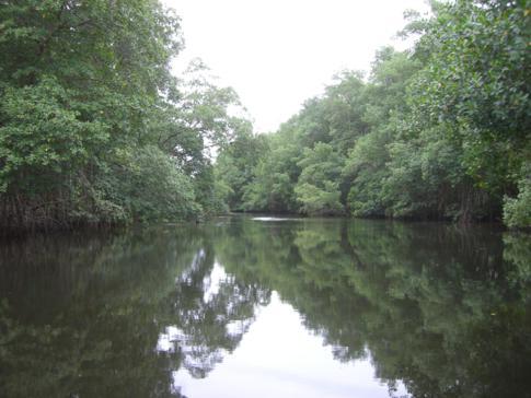 Bootsfahrt über die Flüsse des Caroni Swamp in Trinidad