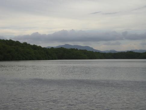 Caroni Swamp in Trinidad