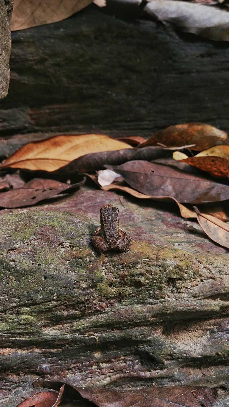 Tierisches in der unberührten Natur von Trinidad
