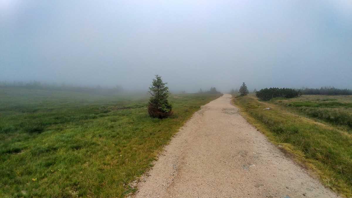 Die Elbwiesen im Riesengebirge kurz nach der Elbquelle