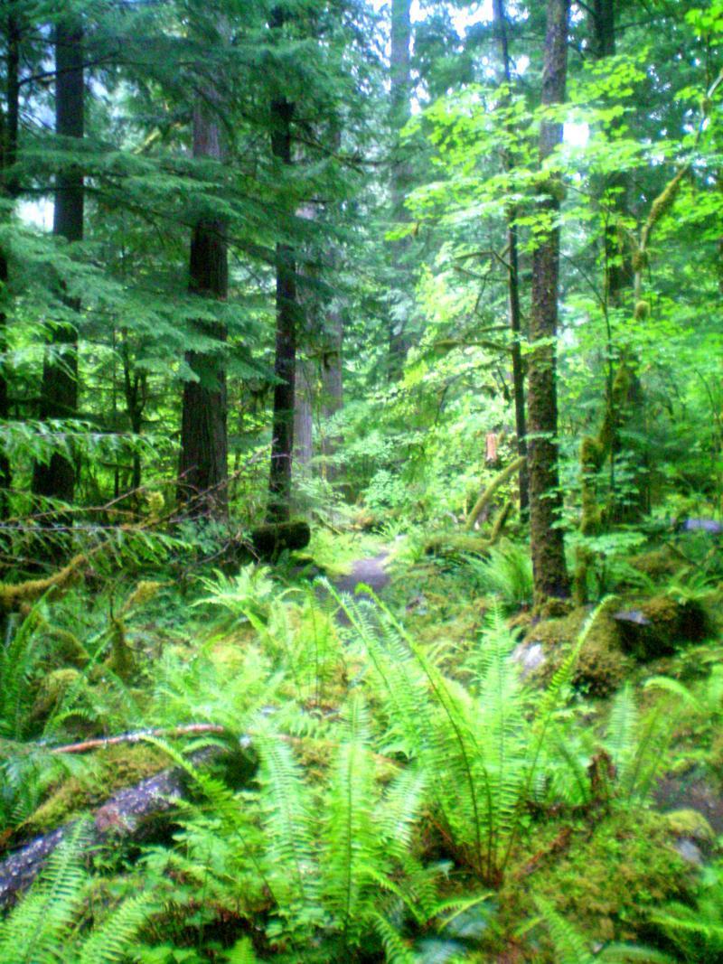 Eindrücke aus Newhalem im North Cascades National Park
