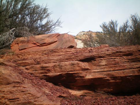 Tolle Gesteinsformationen im Zion Canyon National Park