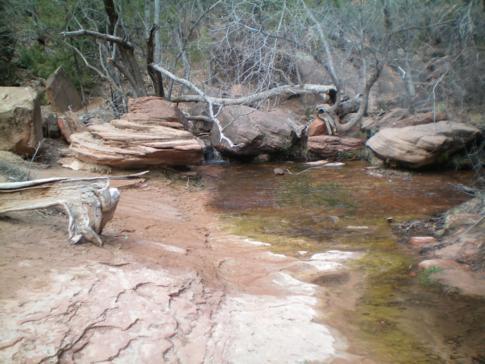 Der mittlere Emerald Pool - Natur pur im Zion Canyon